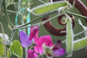 fern with flower